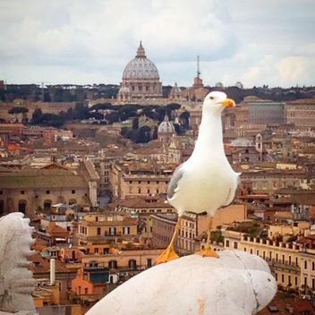 Seagull on a statue - image gratuit #183335