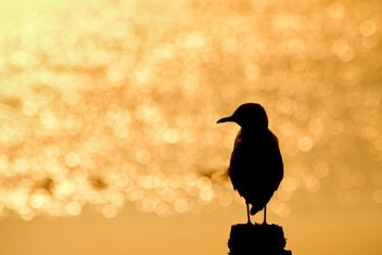 Single seagull - Free image #183445