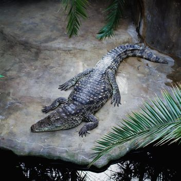 Crocodile near pond in zoo - image #183475 gratis