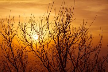 Tree silhouette at sunset - image gratuit #183485