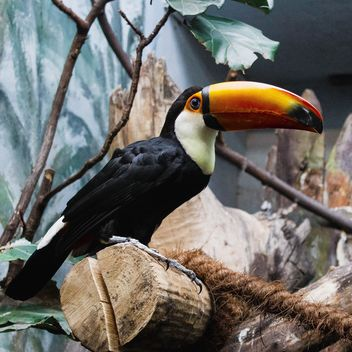 Toucan in Warsaw Zoo - бесплатный image #184295