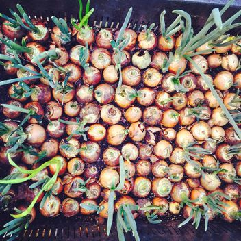 Bulbs of onion - image gratuit #184415