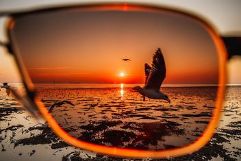 Seagull through sunglasses - image #184655 gratis
