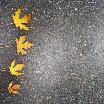 Maple leaves on asphalt - Free image #185645