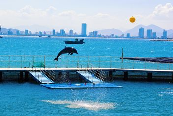the Dolphin show - image #185745 gratis