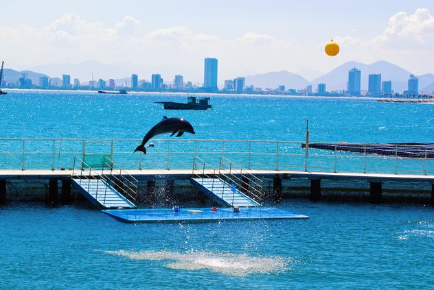 the Dolphin show - Free image #185745