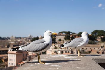 Two seagulls - Free image #185935