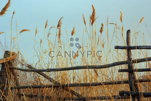 High Dry grass - Free image #185985
