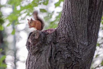 Squirrel on a tree - image #186055 gratis