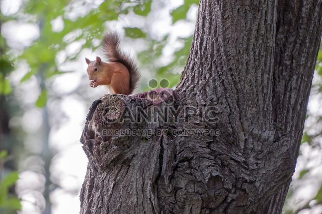 Squirrel on a tree - Free image #186055