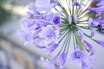 Small purple flowers - image #186255 gratis
