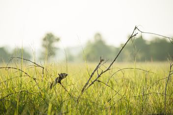 Trees#grass#green#fields#fog#morning#country#branches - Free image #186315