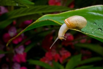 Snail on green leaf - image #187675 gratis