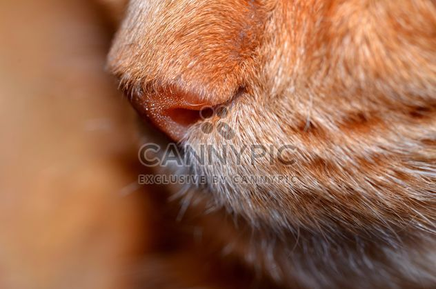 Nose of cat clsoeup - image gratuit #198195