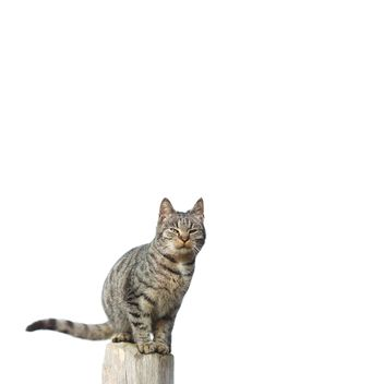 cat on white background - Free image #198625