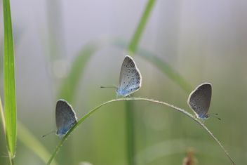 Three grey butterflies - image #199035 gratis