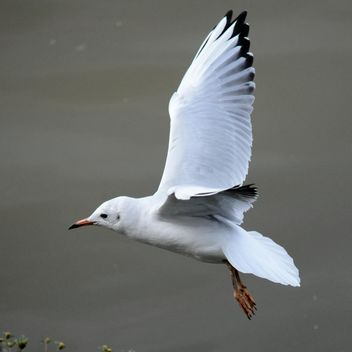 Seagull flying over sea - Free image #201425