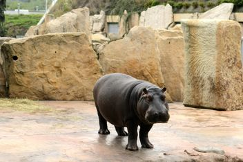 Hippo in the zoo - image #201435 gratis