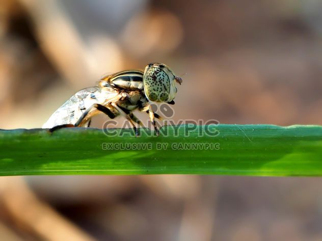 Dragonfly larvae on a grass in field - image gratuit #201515