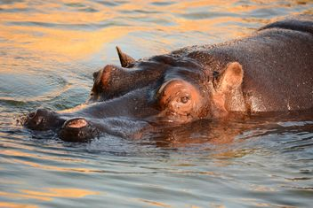 Hippo In The Zoo - image #201595 gratis