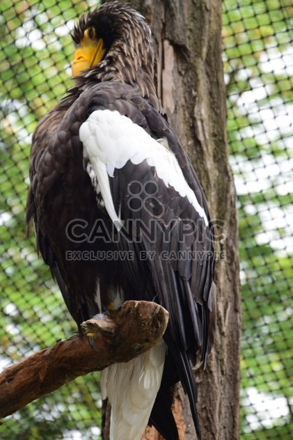 Close-Up Portrait Of Eagle - Free image #201605