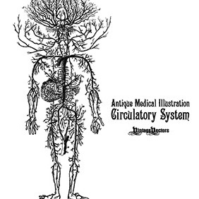 Circulatory System Antique Medical Illustration - Kostenloses vector #218425
