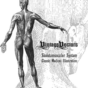 Skeletomuscular System Medical Illustration - vector gratuit #219995