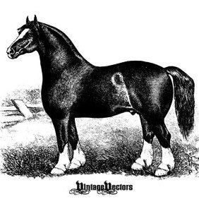 Horse Engraving - Antique - Free vector #221575