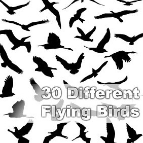 30 Different Flying Birds - vector gratuit #222365