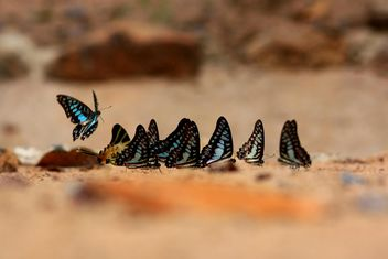 Butterflies close-up - image gratuit #225355