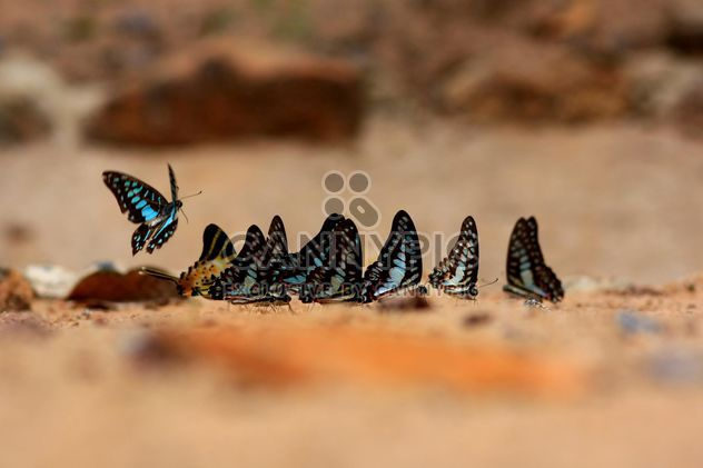 Butterflies close-up - image #225355 gratis