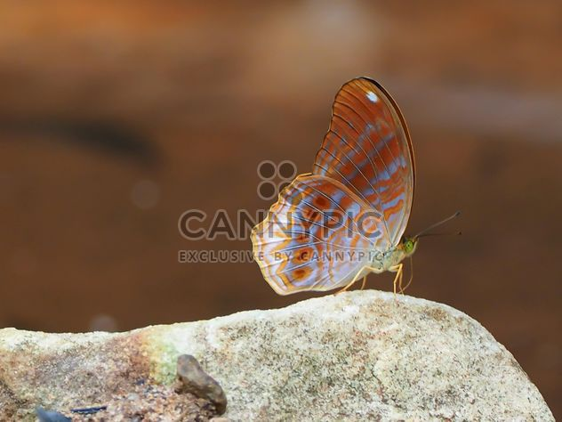 Butterfly close-up - Free image #225395