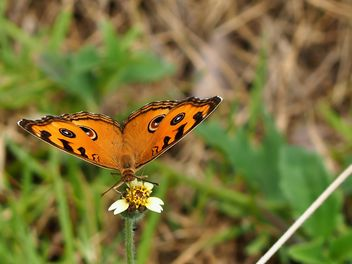 Butterfly close-up - image gratuit #225405