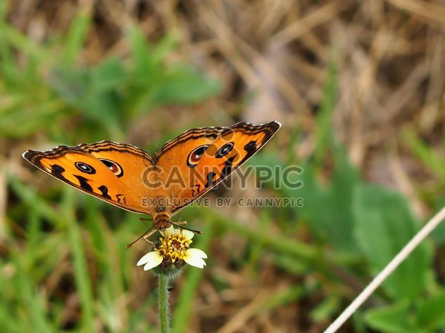Butterfly close-up - Free image #225405