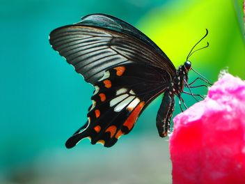Butterfly close-up - Free image #225445