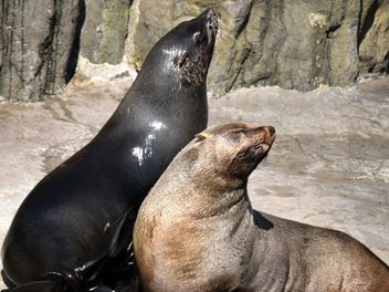 Two Seals - Free image #229485