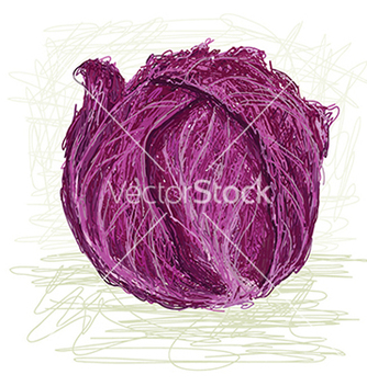 Free red cabbage vector - бесплатный vector #233835