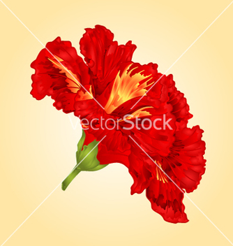 Free tropical flower red hibiscus blossom simple flower vector - Free vector #235185