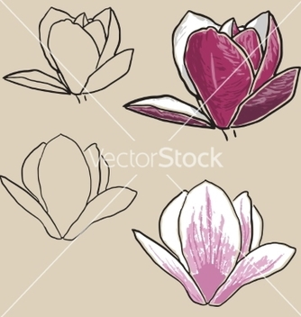 Free set of magnolia flowers vector - Free vector #235635