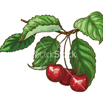 Free cherry on branch vector - Kostenloses vector #235765