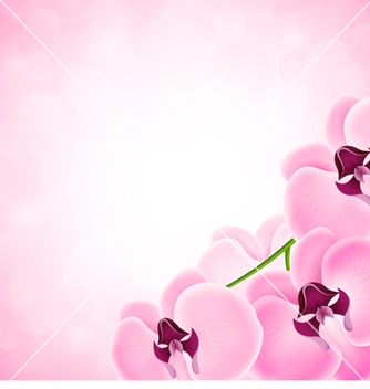 Free background with orchid vector - Kostenloses vector #238835