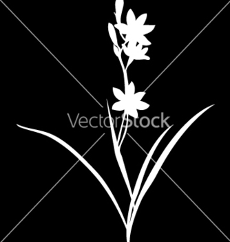 Free simple orchid vector - Free vector #271085