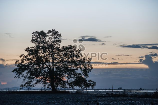 Trees growing from water - бесплатный image #271835