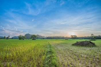 Rice fields - image #272965 gratis
