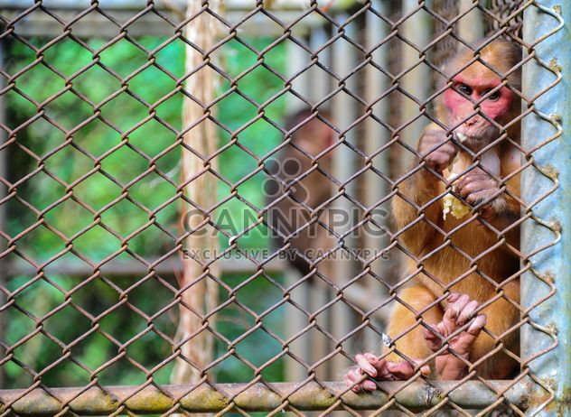 monkey in the zoo - Free image #273055
