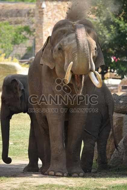 Elephant in the Zoo - Free image #274945