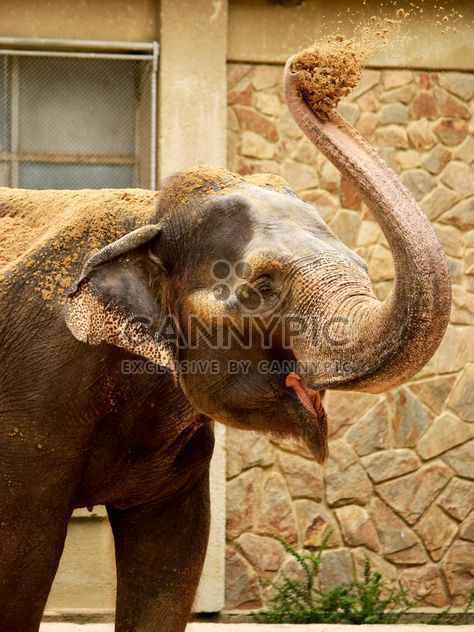 Elephant in the Zoo - Free image #274955