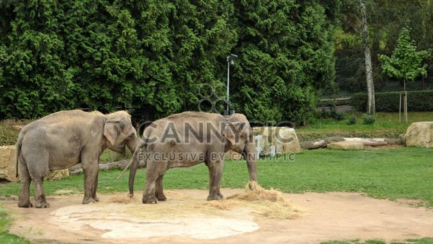 Elephants in the Zoo - Free image #274995