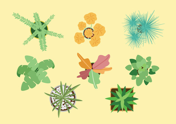 Plant Top View Vectors - vector gratuit #275185