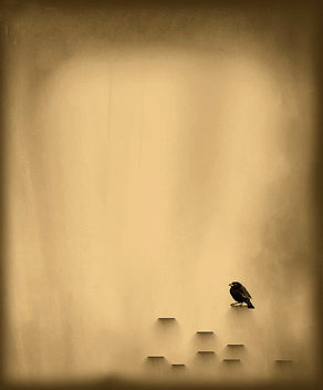 small black bird - image gratuit #275505